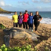 Ocean Spirits Leatherback Sea Turtle Volunteer Project, Grenada