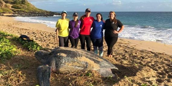 Morning turtle nesting with volunteers in Grenada