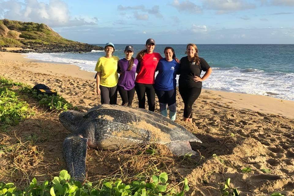 Morning turtle nesting with volunteers in Grenada Work Grenada | Leatherback Sea Turtle Volunteer | Working Abroad