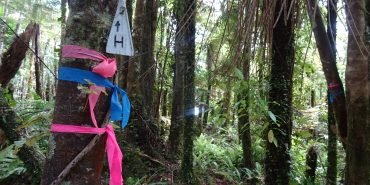 Trail marking New Zealand forest