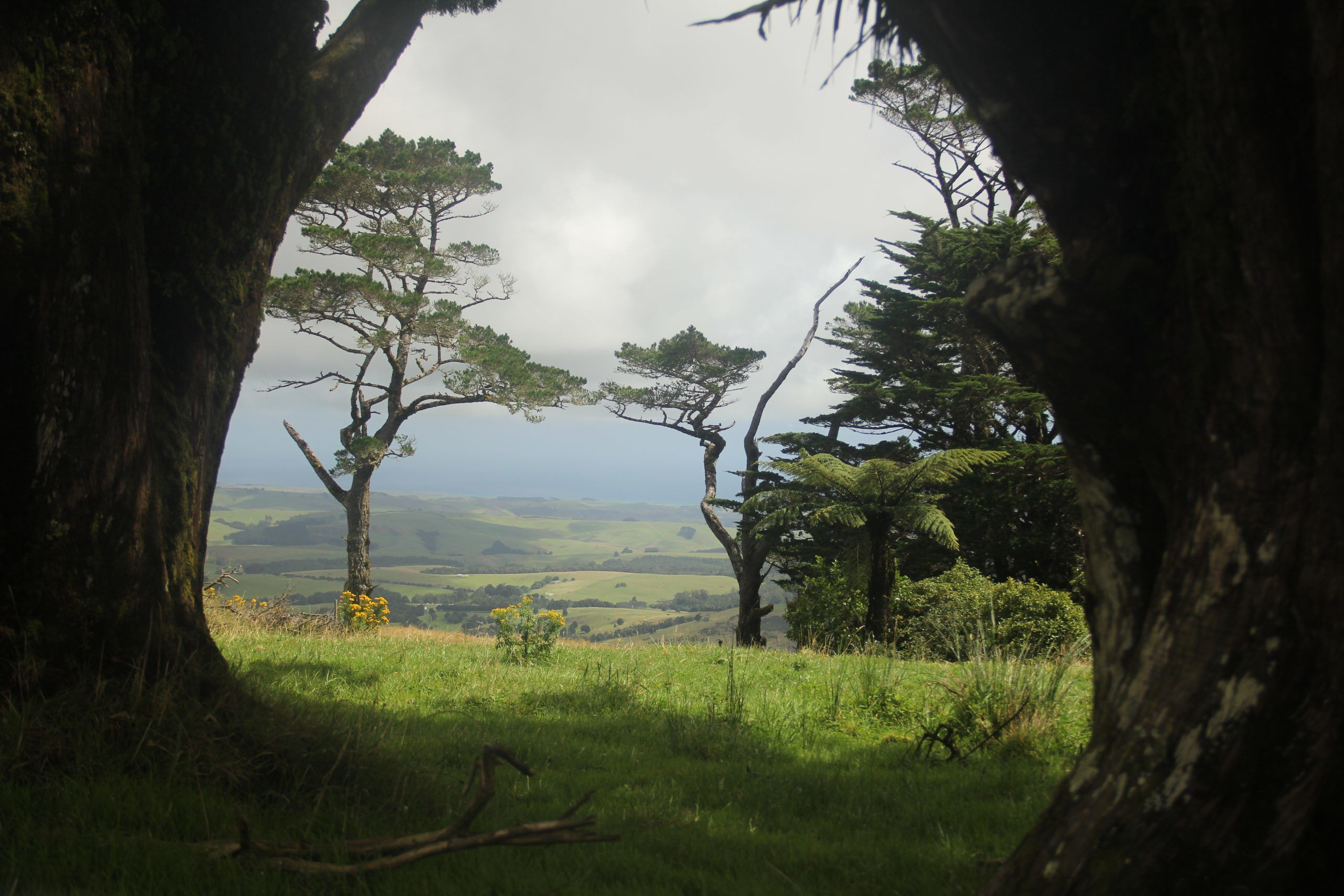 Native forest in New Zealand