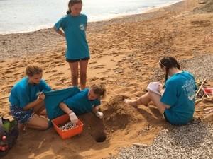 Sea turtle volunteers doing nest relocation