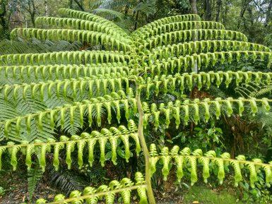 Fern in New Zealand forest