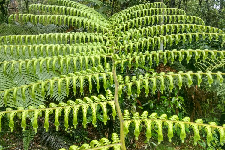 Fern in New Zealand forest