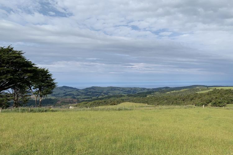 Grass landscape in New Zealand