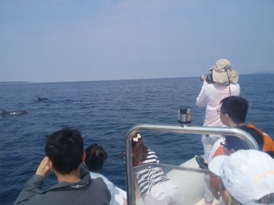Volunteers take photos of dolphins in Croatia