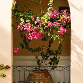 Garden plant in Lixouri