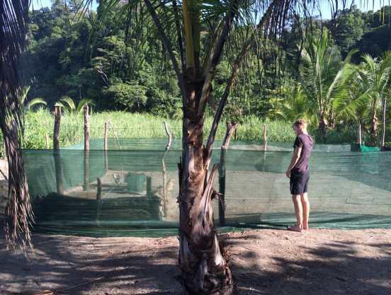 Alex volunteer at Playa Tortuga