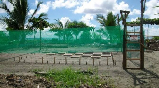Playa Tortuga hatchery