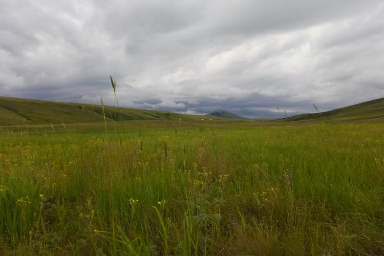 Prairie scenery in Oregon