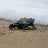Sea Turtle Conservation Volunteer Project, Greece