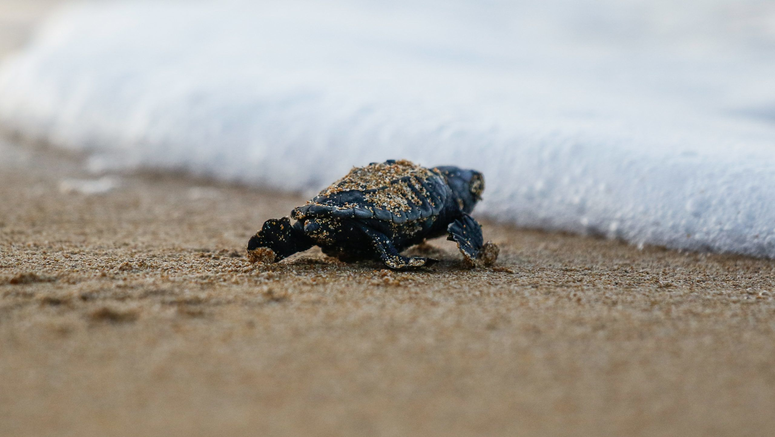 Sea Turtle Conservation Volunteer Project, Greece
