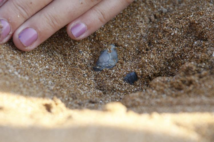 Sea turtle emerging from sand