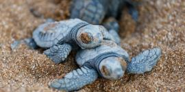 Baby turtles in Greece