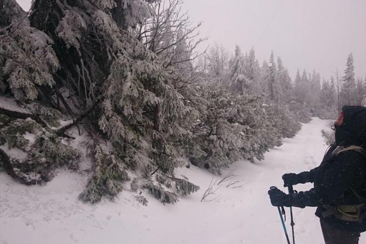 Wolf tracking volunteer skiing Slovakia