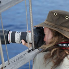 Volunteer taking photos of dolphins and whales in Italy