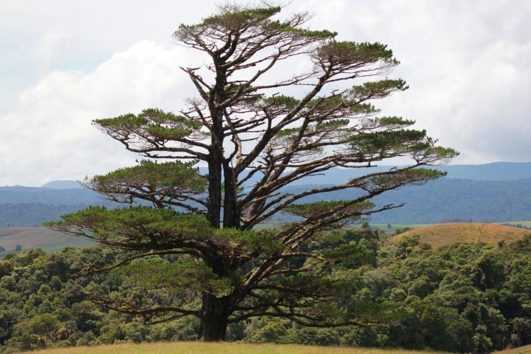 Native tree in New Zealand forest