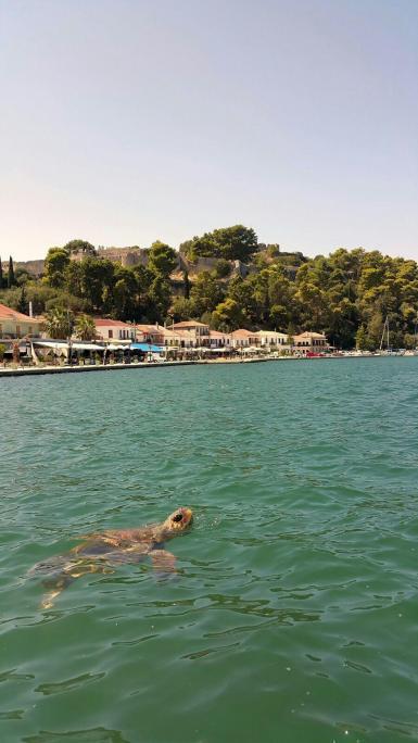 Loggerhead turtle in Greece