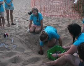 Turtle conservation volunteers on beach in Greece