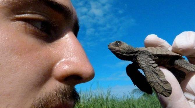 Pacific Sea Turtle Volunteer Project, Costa Rica