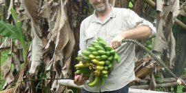 Volunteer collecting bananas in cloud forest Ecuador
