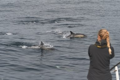 Conservation volunteer observing dolphins in Spain