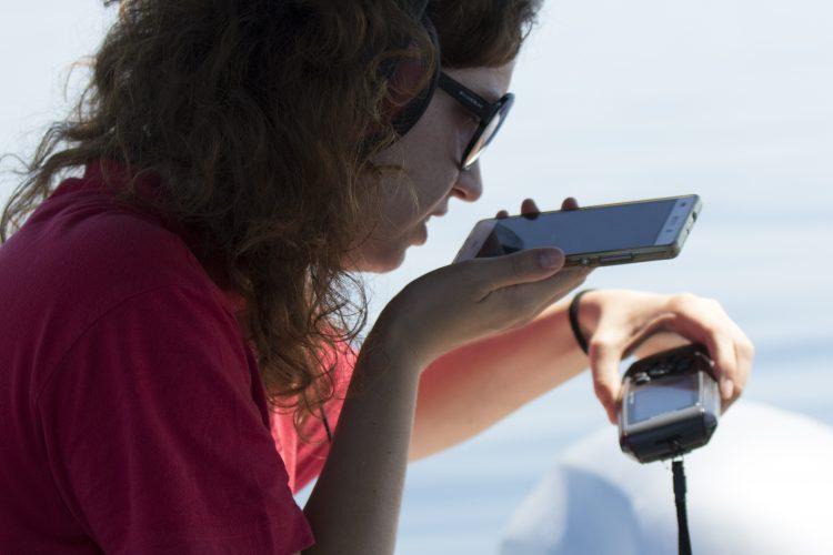 Audio recording of dolphin clicks in Croatia