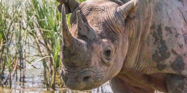 Volunteering with rhinos in South Africa