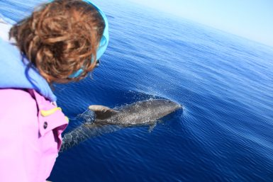 alttagDolphin Whale Research   Volunteer Portugal   Working Abroad