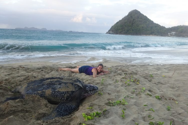 Volunteer with day nesting leatherback sea turtle
