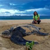 Ocean Spirits Leatherback Sea Turtle Volunteer Project, Grenada