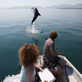 Volunteers watching dolphin jumping