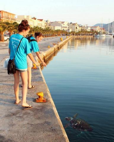 Volunteers observing sea turtle in Argostoli harbour