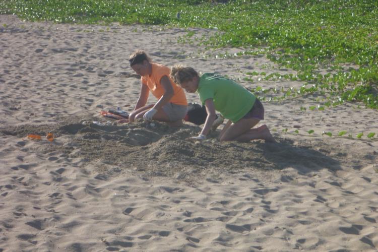 Excavating nest on beach in Grenada