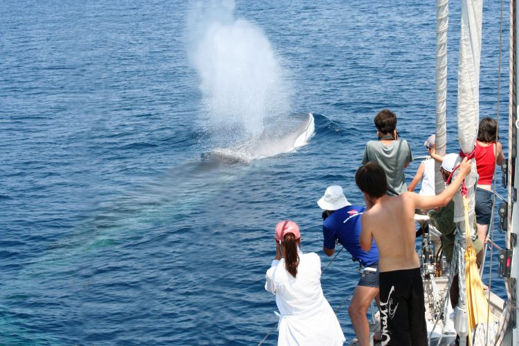 Volunteers watching a fin whale in Italy