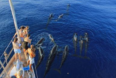 alttagVolunteer with Dolphins | Volunteer with Whales | Working Abroad