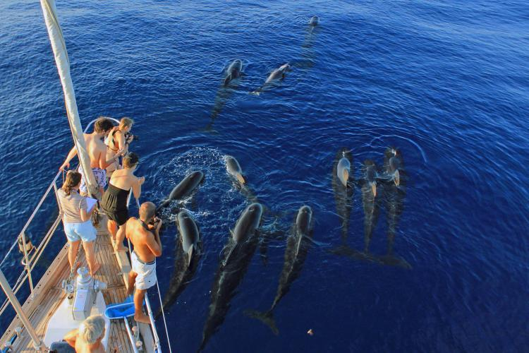 Volunteers researching pilot whales in Italy