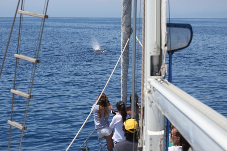 Volunteers researching whales in Italy