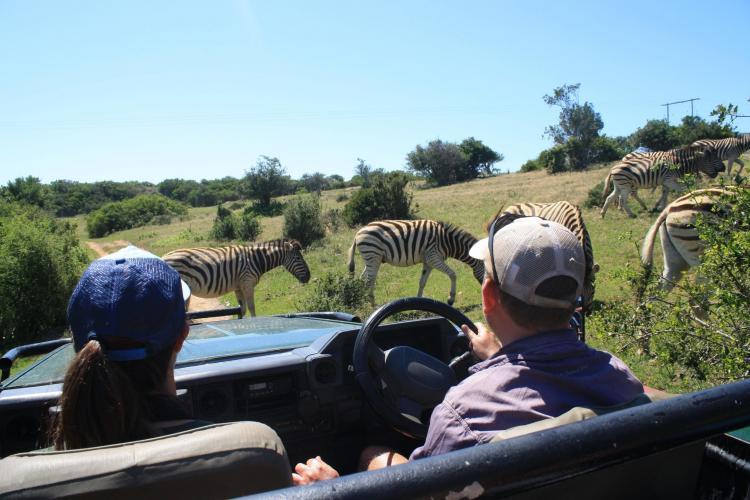 Volunteers watching Zebra in South Africa