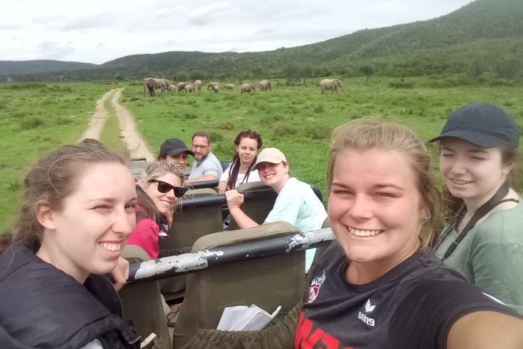Volunteers researching herd of elephants at Kariega