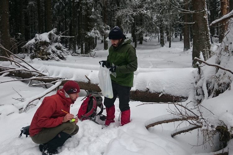 Volunteers collecting wolf tracking data in Slovakia