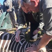 Veterinary and Conservation Experience, South Africa