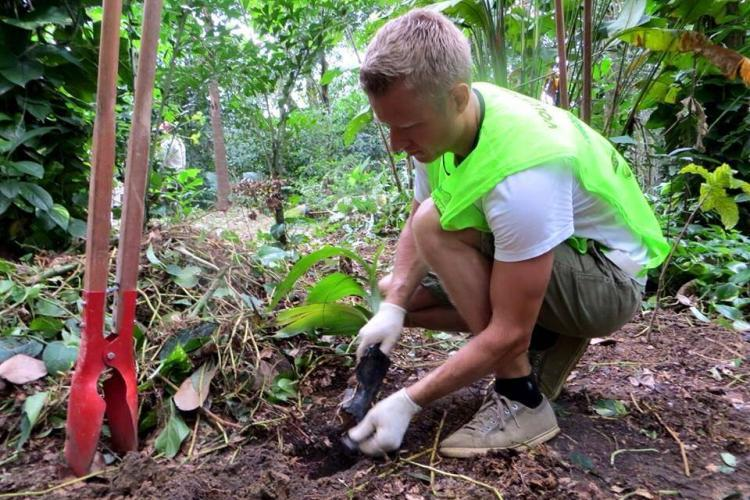 Reforestation in Brazil