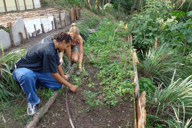 Volunteers in community garden