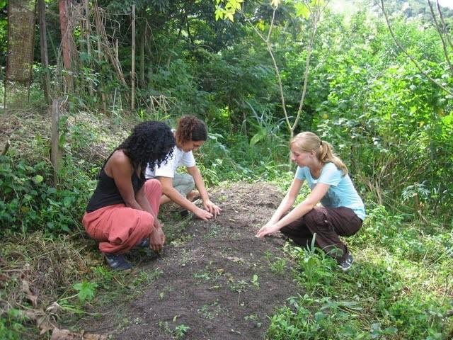 Volunteers planting in community garden
