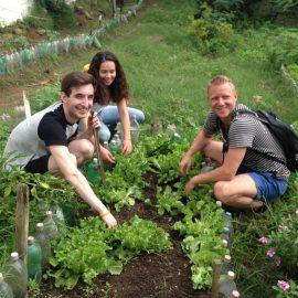 Volunteers replanting