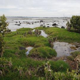 Marsh in Australia