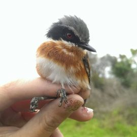 Volunteering with birds in South Africa