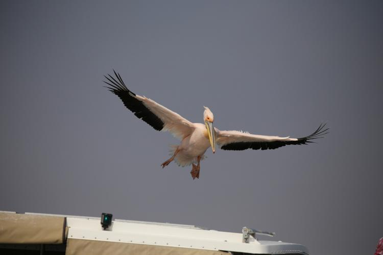 Birds flying overhead at Dolphin Research project in Walvis Bay