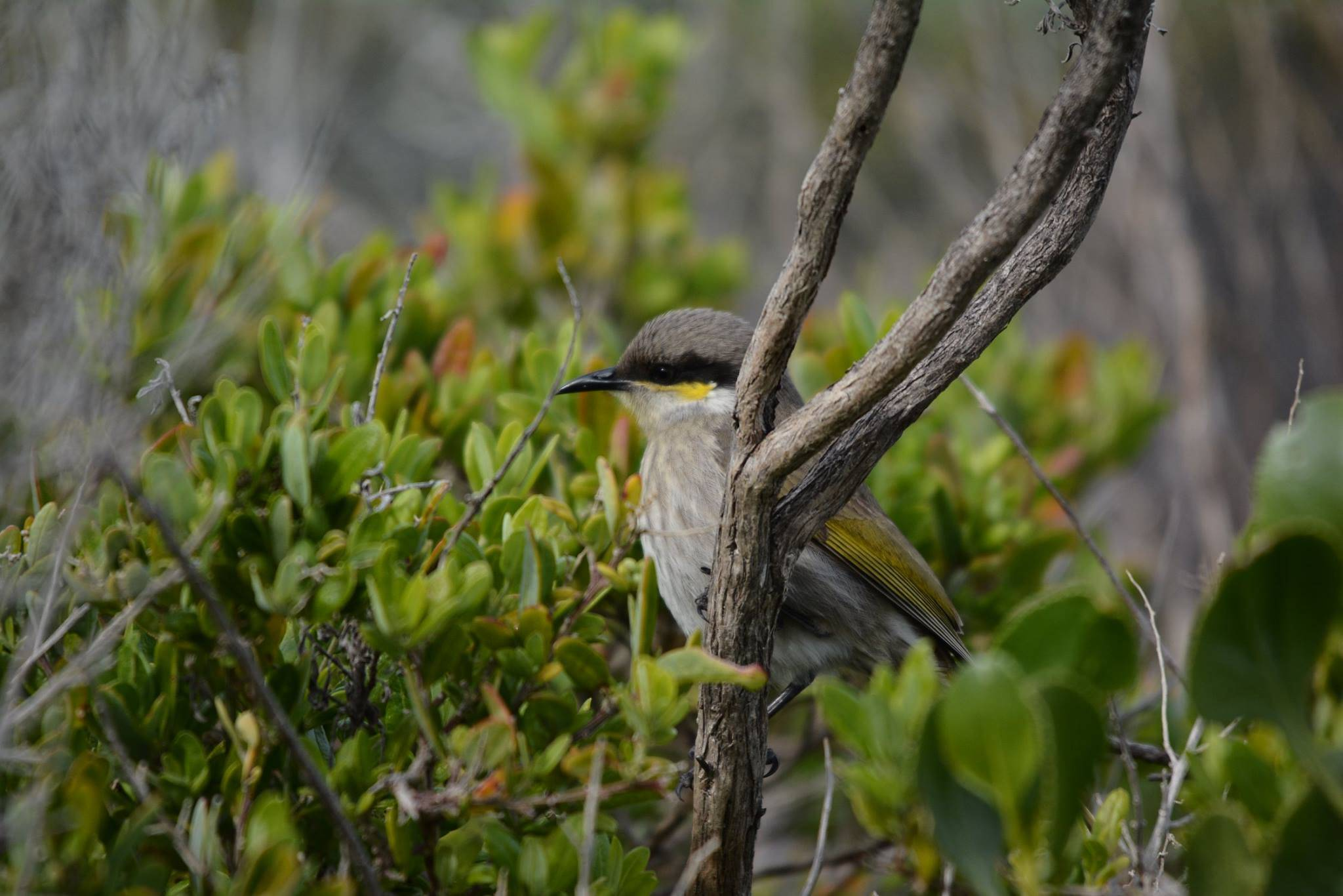 Bird in tree in Australia